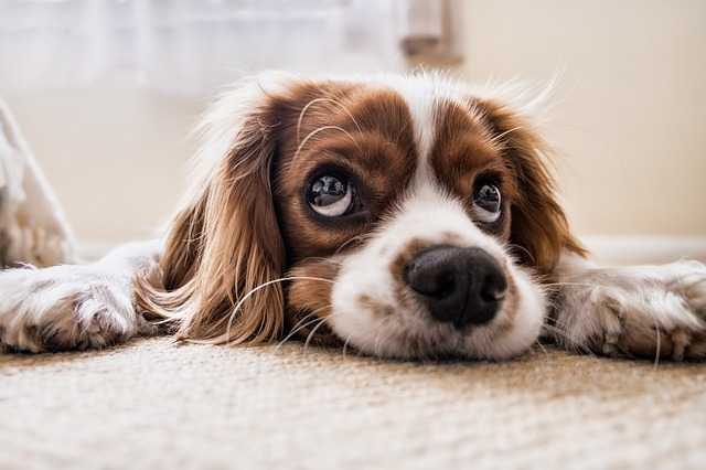 Typy psov do bytu