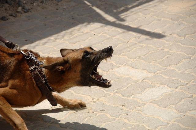 Viete čo robiť ak vás uhryzne pes?